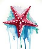 Κόκκινος αστερίας watercolor Στοκ Φωτογραφία