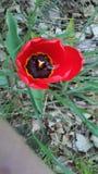 Κόκκινος αυξήθηκε από το κρεβάτι λουλουδιών μου στοκ φωτογραφίες