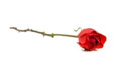 κόκκινος αυξήθηκε ενιαίος Στοκ εικόνες με δικαίωμα ελεύθερης χρήσης
