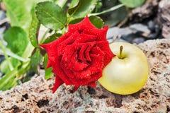 Κόκκινος αυξήθηκε και μήλο σε μια πέτρα στοκ εικόνες