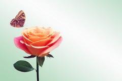 Κόκκινος αυξήθηκε και πεταλούδα Στοκ φωτογραφίες με δικαίωμα ελεύθερης χρήσης