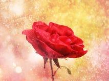 Κόκκινος αυξήθηκε κινηματογράφηση σε πρώτο πλάνο λουλουδιών σε ένα χρυσό υπόβαθρο Στοκ φωτογραφία με δικαίωμα ελεύθερης χρήσης
