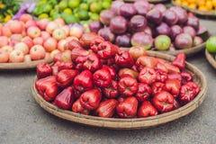 Κόκκινος αυξήθηκε μήλα, homphu, Syzygium cumini, yambozaili ή της Μαλαισίας μήλο, αποκαλούμενο επίσης μήλο κεριά, ροζ, βουνών ή ν Στοκ εικόνα με δικαίωμα ελεύθερης χρήσης