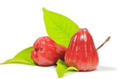 Κόκκινος αυξήθηκε μήλο Στοκ Εικόνα