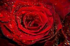 Κόκκινος αυξήθηκε μακροεντολή με τη δροσιά στοκ εικόνες με δικαίωμα ελεύθερης χρήσης