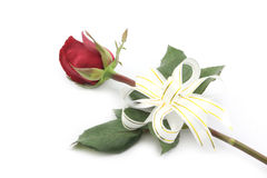 Κόκκινος αυξήθηκε με την άσπρη κορδέλλα που απομονώθηκε στο άσπρο υπόβαθρο Στοκ Εικόνα