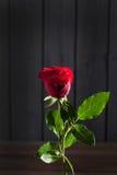 Κόκκινος αυξήθηκε, ξύλινο υπόβαθρο, διάστημα αντιγράφων στοκ φωτογραφία