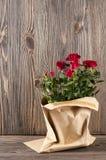 Κόκκινος αυξήθηκε λουλούδια paper-bag σε ένα ξύλινο υπόβαθρο Στοκ Εικόνες