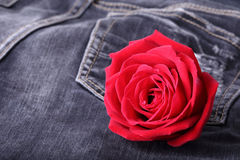 Κόκκινος αυξήθηκε λουλούδι στο μαύρο τζιν τζιν Στοκ φωτογραφία με δικαίωμα ελεύθερης χρήσης