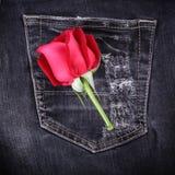 Κόκκινος αυξήθηκε λουλούδι στο μαύρο τζιν τζιν Στοκ Εικόνα