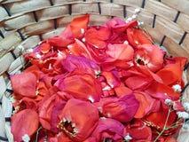 κόκκινος αυξήθηκε πέταλα με τα μικρά άσπρα λουλούδια σε ένα καλάθι στοκ φωτογραφίες με δικαίωμα ελεύθερης χρήσης