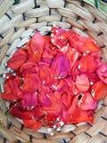 κόκκινος αυξήθηκε πέταλα με τα μικρά άσπρα λουλούδια σε ένα καλάθι στοκ φωτογραφίες