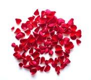 Κόκκινος αυξήθηκε πέταλα Στοκ εικόνα με δικαίωμα ελεύθερης χρήσης
