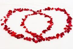 Κόκκινος αυξήθηκε πέταλα δύο άσπρα φύλλα καρδιών στο κρεβάτι Στοκ Εικόνες