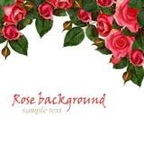 Κόκκινος αυξήθηκε ρύθμιση λουλουδιών Στοκ Εικόνα