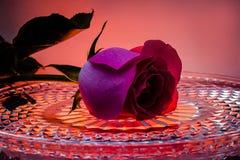 Κόκκινος αυξήθηκε σε έναν δίσκο κρυστάλλου με τα σταγονίδια νερού Λουλούδι της αγάπης στοκ εικόνες με δικαίωμα ελεύθερης χρήσης
