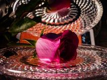 Κόκκινος αυξήθηκε σε έναν δίσκο κρυστάλλου με τα σταγονίδια νερού Λουλούδι της αγάπης στοκ εικόνα με δικαίωμα ελεύθερης χρήσης