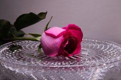 Κόκκινος αυξήθηκε σε έναν δίσκο κρυστάλλου με τα σταγονίδια νερού Λουλούδι της αγάπης στοκ φωτογραφίες