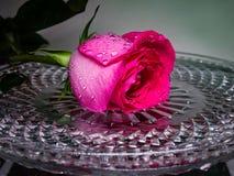 Κόκκινος αυξήθηκε σε έναν δίσκο κρυστάλλου με τα σταγονίδια νερού Λουλούδι της αγάπης στοκ φωτογραφίες με δικαίωμα ελεύθερης χρήσης