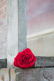 Κόκκινος αυξήθηκε σε μια ξύλινη πλατφόρμα Στοκ Φωτογραφίες