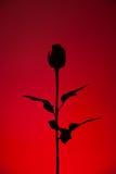 κόκκινος αυξήθηκε σκια&ga Στοκ εικόνα με δικαίωμα ελεύθερης χρήσης
