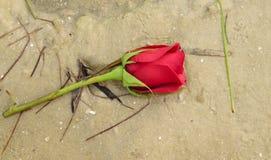 Κόκκινος αυξήθηκε στην παραλία Στοκ φωτογραφία με δικαίωμα ελεύθερης χρήσης