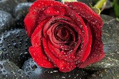 Κόκκινος αυξήθηκε στις μαύρες πέτρες Στοκ Εικόνες