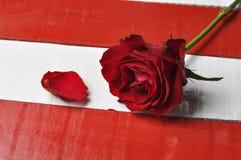 Κόκκινος αυξήθηκε στο άσπρο κόκκινο υπόβαθρο στοκ εικόνες