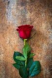 Κόκκινος αυξήθηκε στο σκουριασμένο υπόβαθρο άνδρας αγάπης φιλιών έννοιας στη γυναίκα Στοκ φωτογραφίες με δικαίωμα ελεύθερης χρήσης