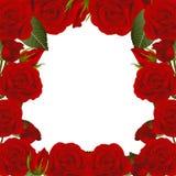 Κόκκινος αυξήθηκε σύνορα πλαισίων λουλουδιών η ανασκόπηση απομόνωσε το λευκό επίσης corel σύρετε το διάνυσμα απεικόνισης διανυσματική απεικόνιση