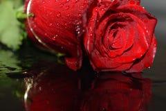 κόκκινος αυξήθηκε υγρός Στοκ Εικόνα