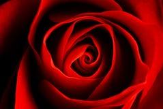 κόκκινος αυξήθηκε Στοκ εικόνα με δικαίωμα ελεύθερης χρήσης