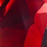 κόκκινος αυξήθηκε Στοκ Εικόνες