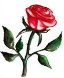 κόκκινος αυξήθηκε watercolor Στοκ Εικόνες