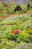 Κόκκινος βράχος πιό βροχερού Στοκ Εικόνες