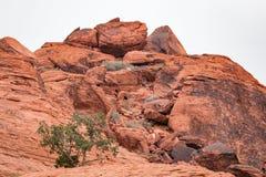 Κόκκινος βράχος στην κόκκινη βράχου περιοχή συντήρησης φαραγγιών εθνική, ΗΠΑ Στοκ εικόνα με δικαίωμα ελεύθερης χρήσης