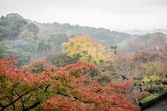 Κόκκινος ιαπωνικός κήπος φθινοπώρου Στοκ εικόνες με δικαίωμα ελεύθερης χρήσης