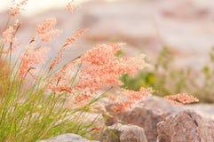 Κόκκινος κάλαμος Στοκ φωτογραφία με δικαίωμα ελεύθερης χρήσης
