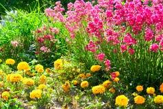 κόκκινος κίτρινος λουλουδιών στοκ εικόνες με δικαίωμα ελεύθερης χρήσης