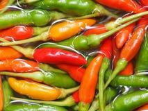 Κόκκινος και πράσινος καυτός πικάντικος τσίλι Στοκ Εικόνες