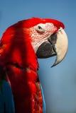 Κόκκινος-και-πράσινο Macaw Στοκ φωτογραφίες με δικαίωμα ελεύθερης χρήσης