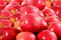 Κόκκινος καρπός μήλων Στοκ Εικόνες