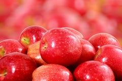 Κόκκινος καρπός μήλων Στοκ Φωτογραφίες