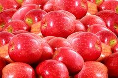 Κόκκινος καρπός μήλων Στοκ εικόνες με δικαίωμα ελεύθερης χρήσης