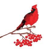 Κόκκινος καρδινάλιος πουλιών στον κλάδο Στοκ Εικόνες