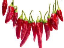 Κόκκινος - καυτά πιπέρια τσίλι σε μια σειρά που απομονώνεται στο άσπρο υπόβαθρο Στοκ Φωτογραφίες