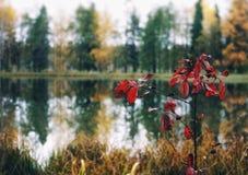 κόκκινος κλάδος φύλλων φύσης δέντρων αντανάκλασης νερού λιμνών φθινοπώρου υπαίθρια Στοκ φωτογραφίες με δικαίωμα ελεύθερης χρήσης