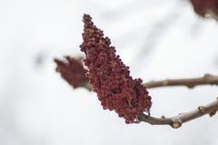 Κόκκινος κώνος στοκ φωτογραφία