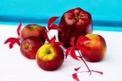 Κόκκινος κλαδίσκος μήλων και woodbine Στοκ Φωτογραφία