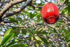 Κόκκινος λαμπτήρας στο δέντρο plumeria στοκ φωτογραφία